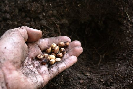 Een handje met sommige klaar te planten zaden