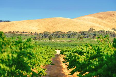 Wine valley in Barossa region, South Australia
