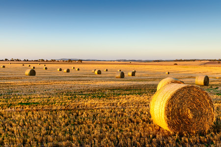 Freshly cropped, farm land hay bales on a sunset