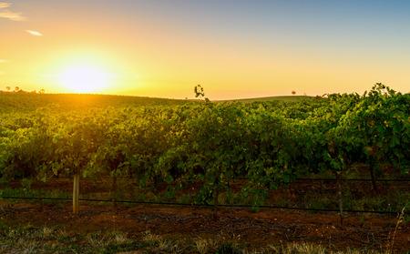barossa: Barossa wine valley at warm summer sunset Stock Photo