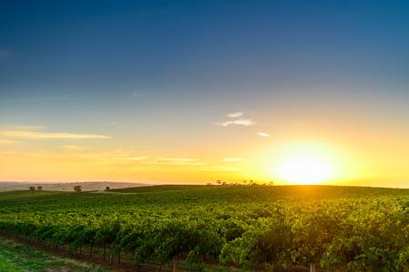 granja: Valle vino al atardecer en Barossa, Australia del Sur