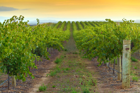 barossa: One of the wineries at Barossa valley Stock Photo