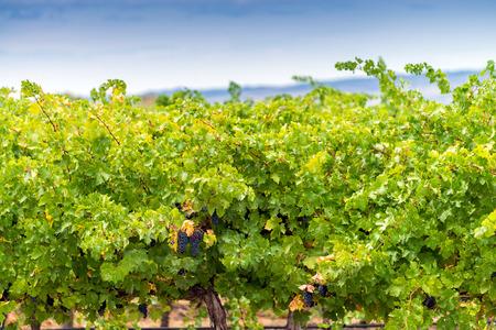 barossa: Wine valley of Australia, Barossa region, South Australia