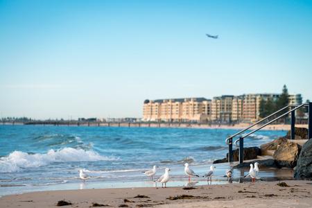 australia beach: Seagulls on the Glenelg Beach, South Australia Stock Photo