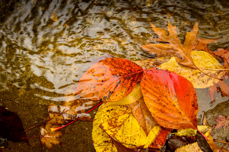 tones: Coloured autumn leaves in the puddle in warm tones