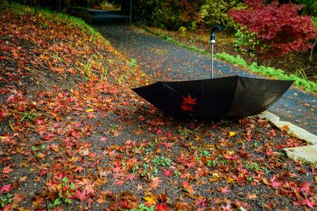 rain: Unattended ubmrella upside down in autumn park among fallen leaves