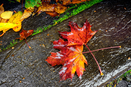under ground: Colourful autumn leaves under the rain on the ground