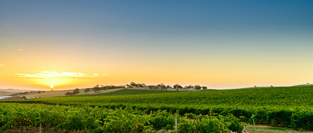 field sunset: Wine valley at sunset, Barossa Region, South Australia