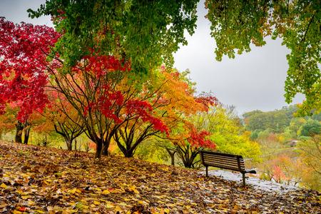 雨の中に秋の公園のベンチ 写真素材