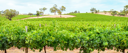 barossa: Wineries of Barossa Valley region in South Australia Stock Photo