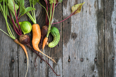 misshapen: Trendy ugly organic carrot, beetroot and cucumber from home garden