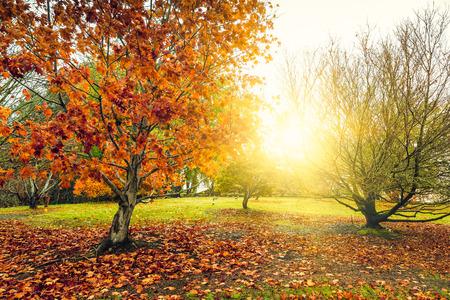 Una escena de otoño pacífica hermosa en el parque durante la lluvia. efecto de proceso cruzado aplicado. Foto de archivo