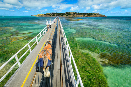 clydesdale: Adelaide, Australia - November 16, 2013: The Victor Harbor Horse Drawn Tram on the causeway  heading to the Granite Island on a day