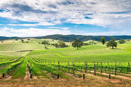valle del vino pintoresca en Barossa, Australia del Sur.