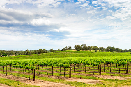barossa: Picturesque winery in Barossa Valley, South Australia.