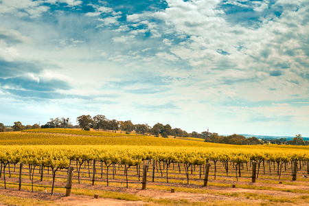 barossa: Picturesque wine valley in Barossa, South Australia. Color-toning effect appplied Stock Photo