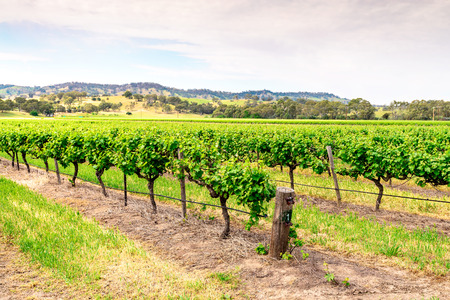 barossa: Picturesque winery in Barossa Valley, South Australia