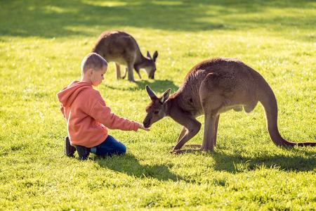 sitting on the ground: Little kid sitting on the ground and feeding kangaroo. Stock Photo