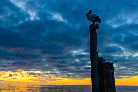 Pelican sitting on the pole near Glenelg Beach at sunset, South Australia Stock Photo