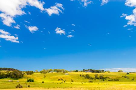 Landbouwgrond met grazende koeien langs de Great Ocean Road Stockfoto