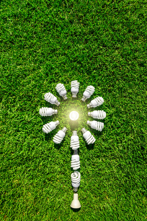 Energy efficient light bulbs on grass forming flower. Green source of energy concept Imagens
