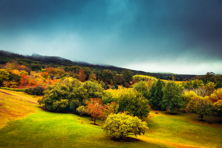 Colorful autumn trees under stormy sky in Mount Lofty, Adelaide Hills, South Australia