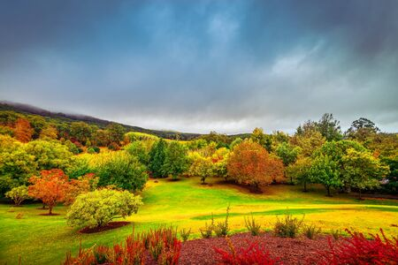 Escena de otoño espectacular con coloridos árboles bajo nubes tormentosas en Mount Lofty, Adelaide Hills, Australia del Sur Foto de archivo