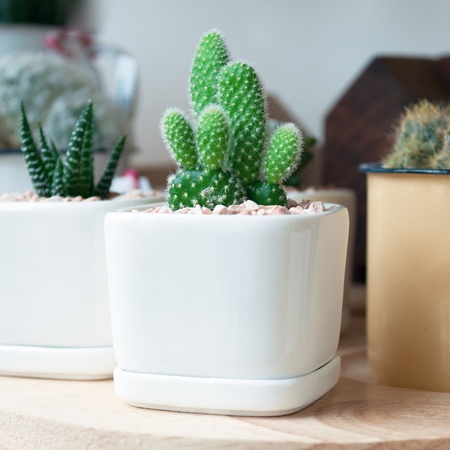 Green cactus in a pot of white paste on a wooden floor.
