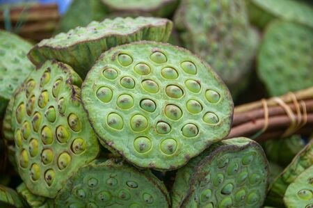 Natural green lotus seed pods blossom Stok Fotoğraf