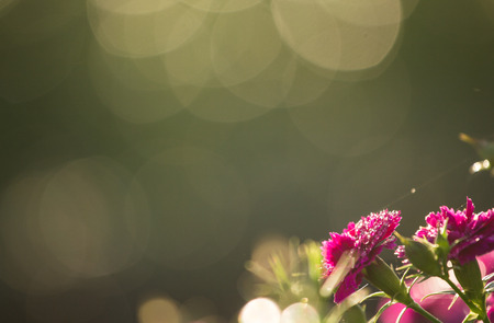 Aster Autumn Flowers Art Design over Black Background photo