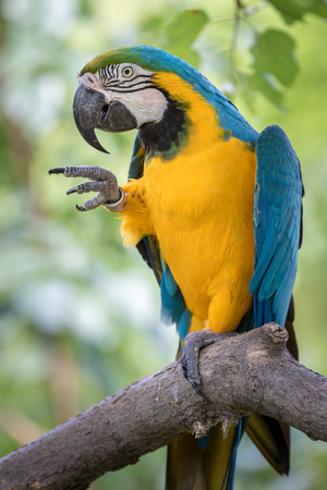 kansas: Parrot in a tree Stock Photo