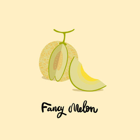 Vector melon illustration. Yellow ripe melon on light background. Textured menons, juice japanese fruit. One slice and the whole fruit.