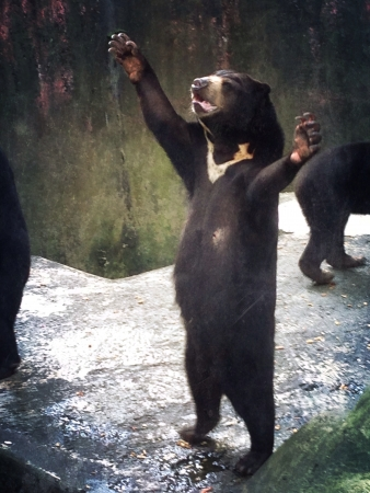 Bear praise for food