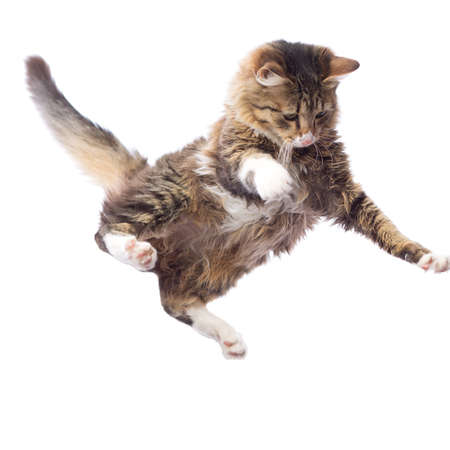 portrait of a cute flying fluffy kitten Banque d'images