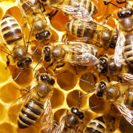 Macro of working bee on honeycells. Banco de Imagens