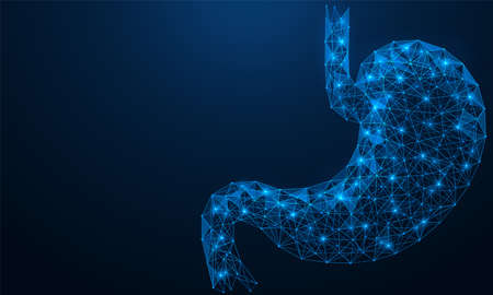 Low-poly stomach. Human digestive organ. Polygonal 3D construction of concatenated lines and points. Blue background. Иллюстрация