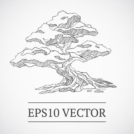 Sketched bonsai tree