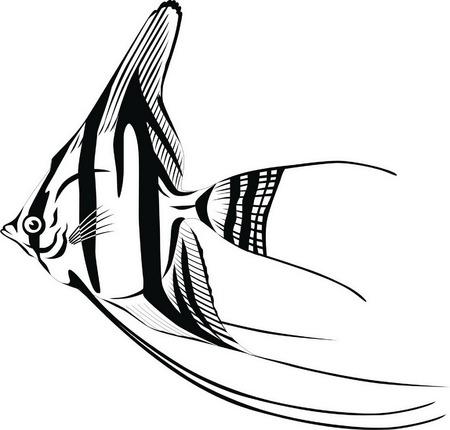 丸い体と長いフィンとストライプの魚。