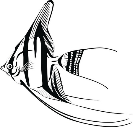 Striped fish with a round body and long fins. Vector