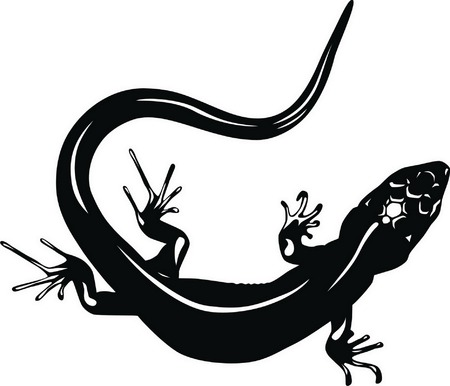 The lizard creeps, coiling the flexible body. Stock Vector - 5145101