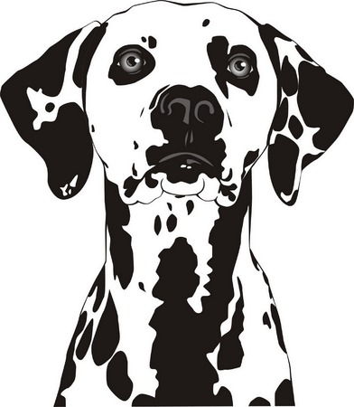 Spotty dog with trailing ears. Vector