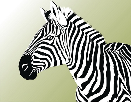 Head of a zebra on a green background. Vector