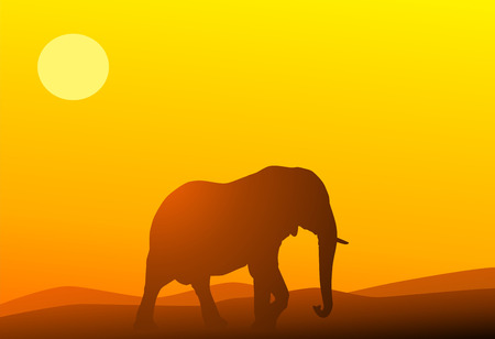 Elephant against a red sunset Vector