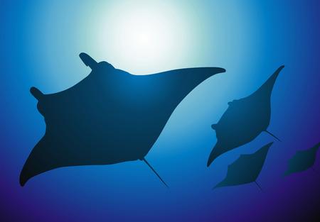 stinger: The flight of slopes floats in sunlight beams