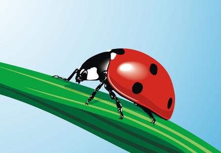 creeps: Los creeps ladybird sobre una hoja verde  Vectores