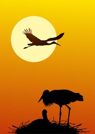 Nest of storks against a sunset