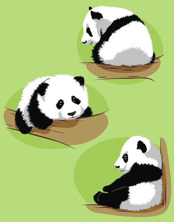 The cub of a panda creeps on a tree in various poses