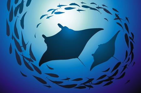 shoal: Two big slopes float in a jamb of fishes Illustration