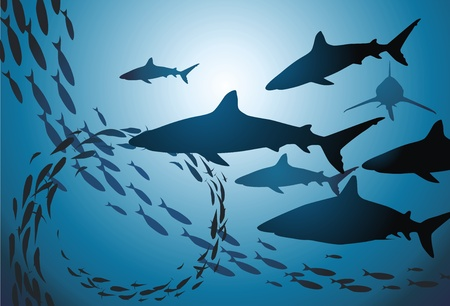 sharks: The flight of sharks and sea fishes swim jambs