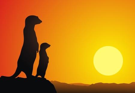 mangosta: Dos suricatas est�n al borde de una roca en contra de una puesta de sol